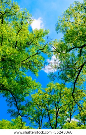 Tree canopy in spring time