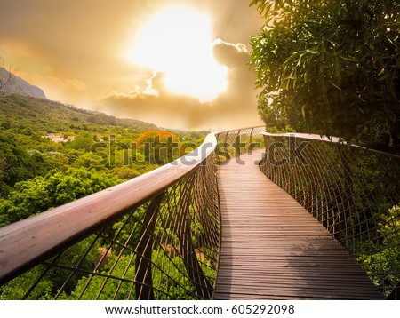 Tree Canopy Walkway (wooden bridge) in Kirstenbosch National Botanical Garden is acclaimed as one of the great botanic gardens of the world with gold light sky background, Cape Town, South Africa  #605292098