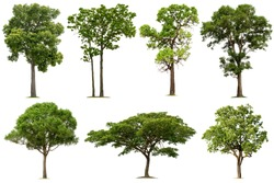 Tree collection in tropical forest on a white background for graphic design or gardening work
