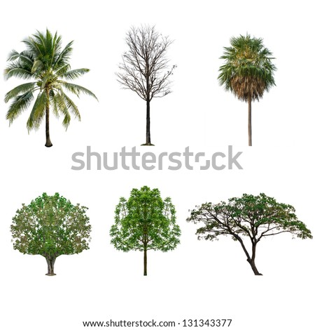 Tree collection set  isolated on white