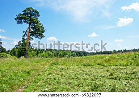 Tree, country way, wood and blue sky