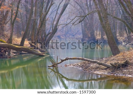 Tree Covered River