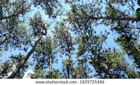 Tree crown views along Rice Creek Hiking Trail Stock photo ©