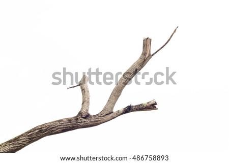 tree death or branch die on white background. #486758893