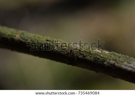 tree detail #735469084