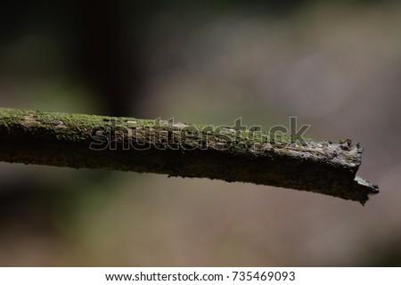 tree detail #735469093