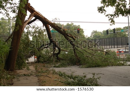 Tree Down Across an Intersection, St. Louis, Missouri