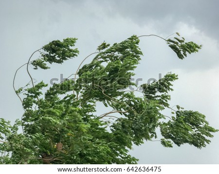 tree during heavy wind
