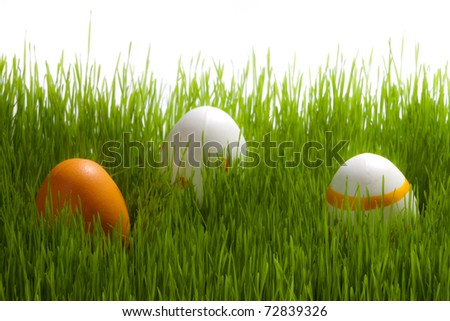 Tree easter Eggs on green grass on white background