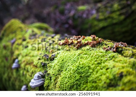 Tree fallen on the ground and covered with green moss and mushrooms #256091941