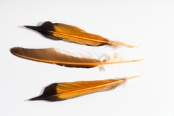 Tree feathers of a northern flicker bird isolated on white.