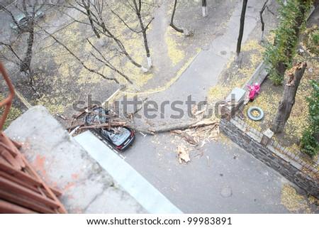 tree fell on a car - stock photo