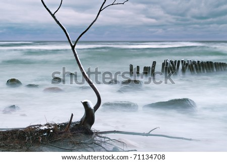 tree fell to the water with a high bank of the Semba peninsula, destroyed by the winter Strohm shot at long exposures