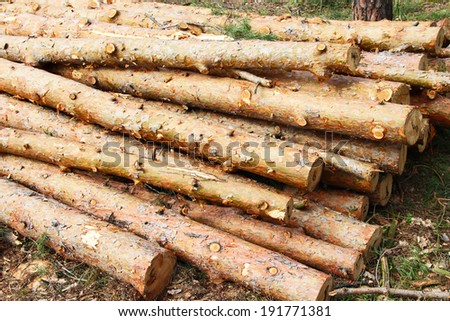 tree felled. log. pine deck. firewood. material. forest. tree. Timber. timber