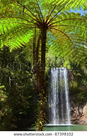 tree fern and waterfall in tropical rain forest paradise at Millaa Millaa falls Tablelands Queensland Australia lush green pristine rainforest - stock photo
