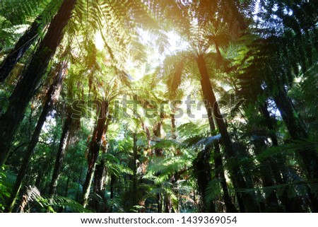 Tree ferns canopy in tropical jungle  #1439369054