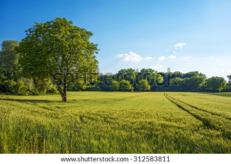 Tree, field, meadow and forest - blue sky #312583811