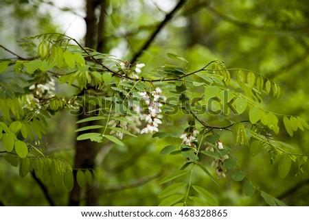 tree flower 1 #468328865