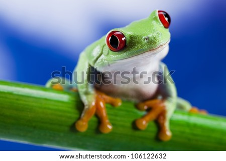 Stock Photo Tree frog
