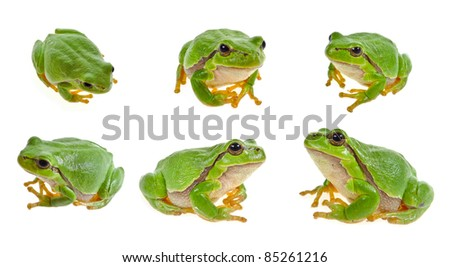 tree frog   collection