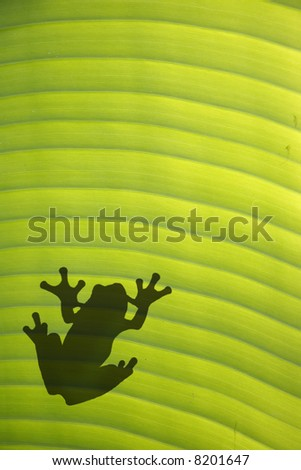 Tree frog on sunlit leaf from below