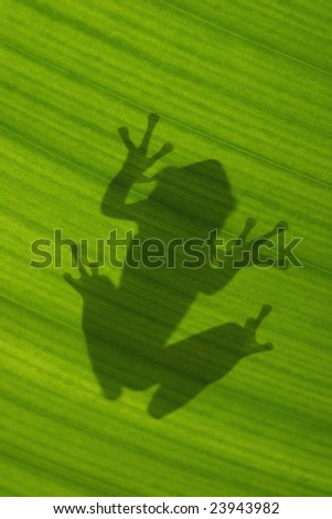 Tree Frog silhouette through a leaf
