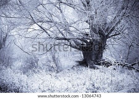 Tree from a fairy tale in a winter scene.