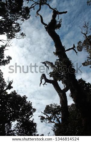 tree from below #1346814524