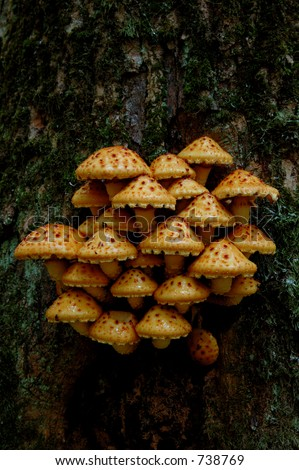Tree fungus, european forest,Poland