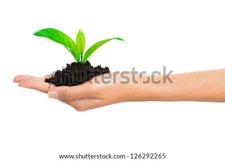 Tree green fresh in female hands - stock photo