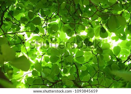 Stock Photo Tree Green Leaf Backlit Background