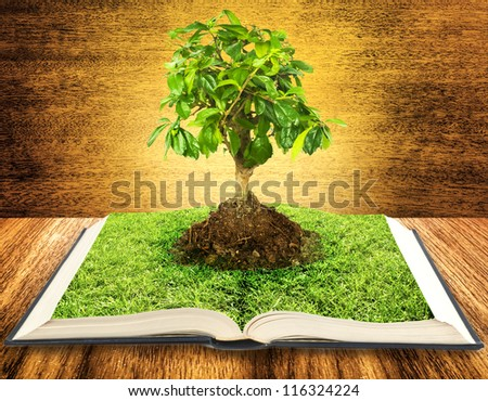 Tree growing from a book on wooden table