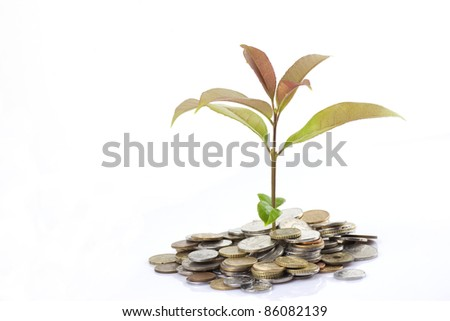 Tree growing from coins  on white background
