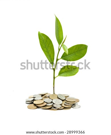 Tree growing from pile of coins