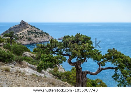 Tree growing near edge of steep rock. Mountains & sea are on background. Shot in Novyi Svit, Crimea. Cape named Kapchik, sea is Black Sea Stock foto ©
