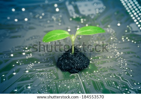 tree growing on a computer circuit board / green it / green computing / csr / it ethics
