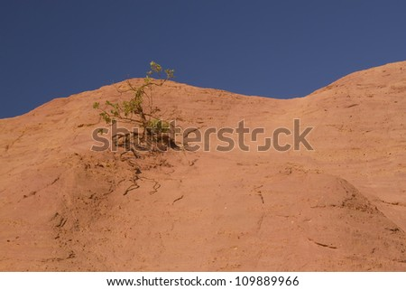 Tree growing on an orange ocher hills and blue sky in the background. Ocher rocks (French Colorado) near Rustrel (Provence, Southern France)
