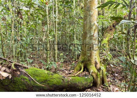 Tree growing over a decomposing log on the rainforest for Forest floor definition