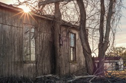 Tree growing through an abandoned building. The sun rises over the top of a wooden building surrounded by bare trees located in Delcambre, Louisiana.