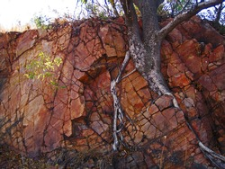 TREE GROWING THROUGH ROCKFACE IN NATURE