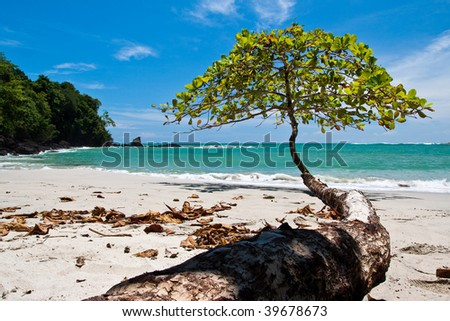 Tree growing towards the sea on the beach