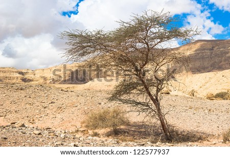Tree grown from the ground in Timna Valley, Israel