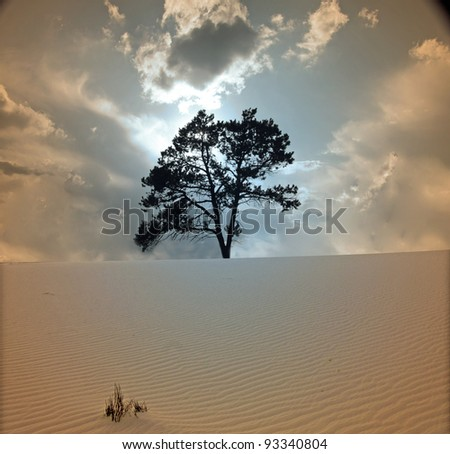 Stock Photo Tree grows in desert scene