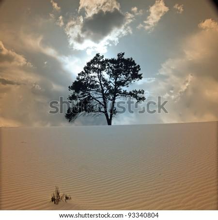 Stock Photo Tree grows in desert scene