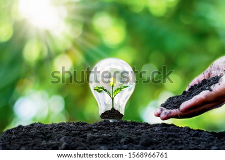Tree grows in light bulbs, energy-saving and environmental concepts on Earth Day. Foto stock ©
