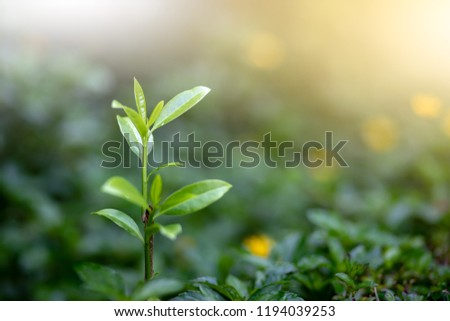 Tree grows nature life beautiful in garden with copy space for text #1194039253