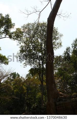 Tree grows on ruins at Preah Khan. Preah Khan is a temple at Siem Reap, Cambodia. #1370048630