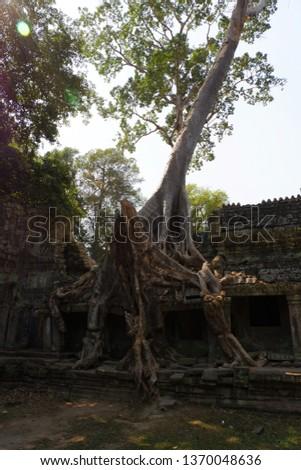 Tree grows on ruins at Preah Khan. Preah Khan is a temple at Siem Reap, Cambodia. #1370048636