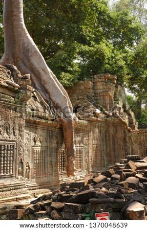 Tree grows on ruins at Preah Khan. Preah Khan is a temple at Siem Reap, Cambodia. #1370048639