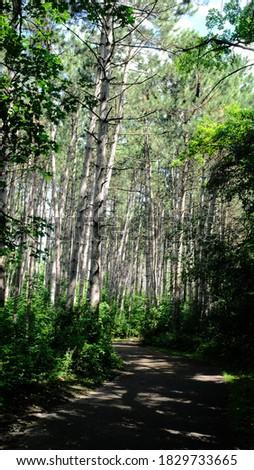 Tree growth in Rice Creek hiking trail in Minnesota Stock photo ©